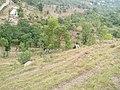 Mountain Top in Kotli Azad Kashmir.jpg