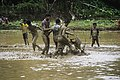 Mud football Kinassery Kerala India 4.jpg