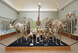 Musée Cantonal de Zoologie - Image: Musée cantonal de zoologie (Lausanne), 11