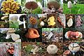 Mushroom collection from a walk trough Park Rozendaal - panoramio.jpg