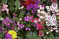 Myriad Floral.jpg