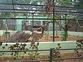 Mysore Zoo - 20.JPG
