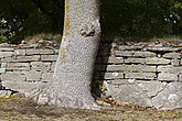 Fil:Nässja kyrkas kyrkogård 03.jpg