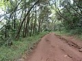 Nairobi Arboretum Park 32.JPG