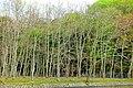 Nara Park - Nara, Japan - DSC07440.jpg