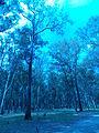 Naturaleza Verde y Azul.JPG