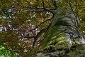 Naturdenkmal Rot Eiche im Pankow.jpg