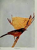 Nature neighbors, embracing birds, plants, animals, minerals, in natural colors by color photography, containing articles by Gerald Alan Abbott, Dr. Albert Schneider, William Kerr Higley...and other (14564545317).jpg