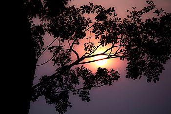 Nature sunset.jpg