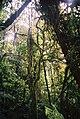 Natureza (4081667082).jpg