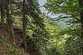 Naturschutzgebiet Feldberg (Black Forest) - Alpiner Steig am Feldberg - Bild 013.jpg