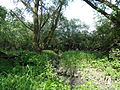 Naturschutzgebiet Heuckenlock 21.05.2014 Phase 109.JPG