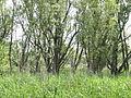 Naturschutzgebiet Heuckenlock 21.05.2014 Phase 59.JPG