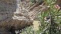 Navidhand HD 206 - panoramio.jpg