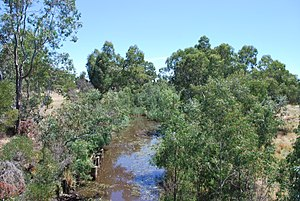 Loddon River - Loddon River at Newstead