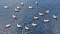 Nimmo's Pier, River Corrib, Galway (506175) (25794168214).jpg