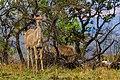 Nkomazi Game Reserve, South Africa (22639152032).jpg