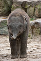 Noorder dierenpark (3986853607).jpg
