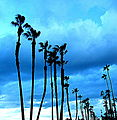 Oceanside, California 08.jpg