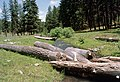 Ochoco National Forest, Mill Creek stream restoration-3 (36594176135).jpg