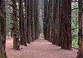 Ocotal forest 202006p5.jpg