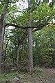 Ohiopyle State Park River Trail - panoramio (148).jpg