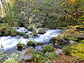 Oirase River in Fall 20121027a.JPG