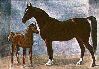 Thoroughbred breeding theories - Old Bald Peg, dam of the Old Morocco Mare (c.1655)