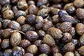 Olives(NYONS) Cl J Weber (2) (23158654982).jpg
