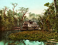 On the Ocklawaha, Florida, 1902.jpg