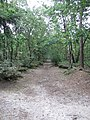 Op de Galgenberg (30970714822).jpg