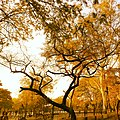 Orange Nature.jpg
