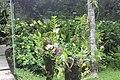 Orchid Garden Bali Indonesia - panoramio (5).jpg