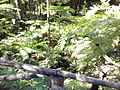 Orto botanico di Napoli 106.jpg