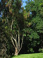 Oslo Botanical Garden - IMG 8986.jpg