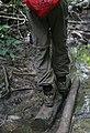 Overbridge rain forest (2719408239).jpg