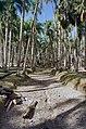Overzicht van de palmentuin - Paramaribo - 20417695 - RCE.jpg