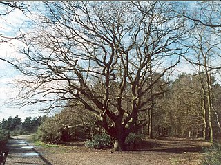 several large wooded areas to the south-west of Esher