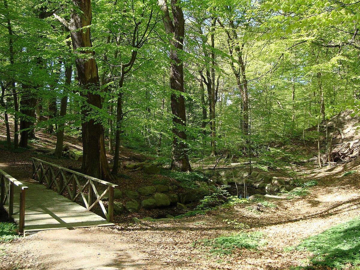 skog i skåne