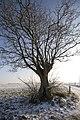 PM 023590 B Oudenaarde.jpg