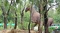 Pakistan Museum of Natural History exhibits 01.jpg