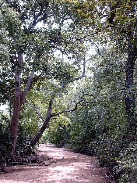 بوركينا فاسو 450px-Pama_reserve_M