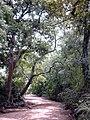 Pama reserve MS1150.jpg
