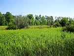 Parc-nature de l-Anse-a-l-Orme 034.jpg