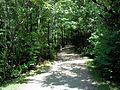 Parc-nature du Bois-de-l-ile-Bizard 01.jpg
