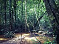 Parc amazonien de Guyane, une balade à Saül.jpg