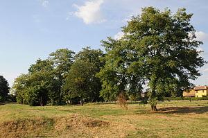 Campaccio - Trees on the race course in San Giorgio su Legnano