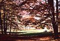 Parco naz della Majella.JPG