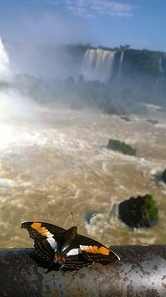 File:Parque Nacional do Iguaçu - Vista das Cataratas.jpg