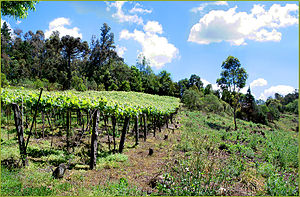 Rio Grande do Sul - Wine production in Caxias do Sul.